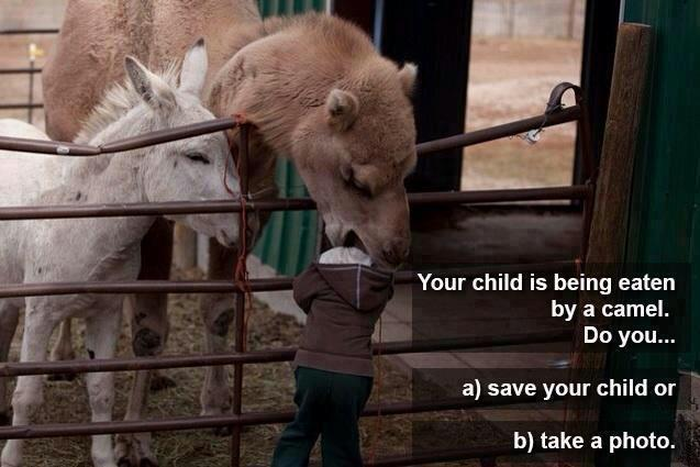 Your child is being eaten by a camel. Do you...
